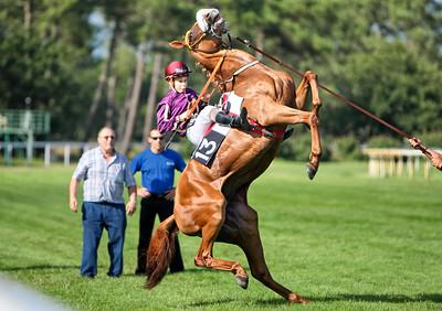 horse 8159-CdeB