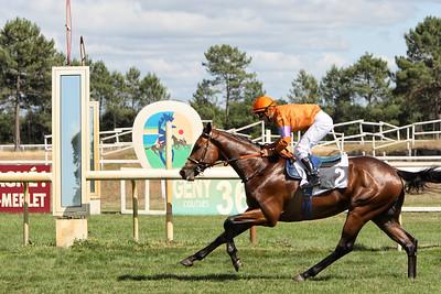 horse 7935
