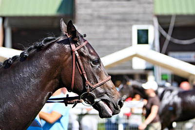 horse 8131