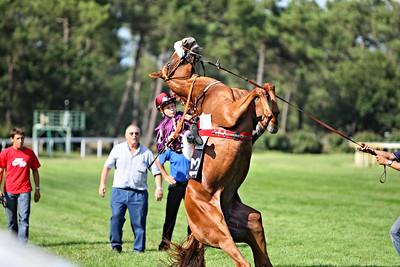 horse 8161-CdeB