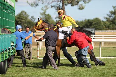 horse 8217