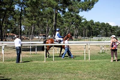 horse 7801
