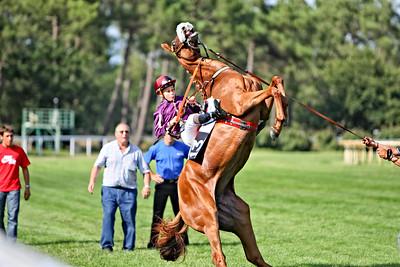 horse 8160-CdeB