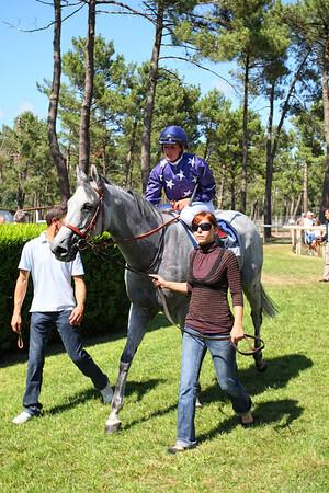 horse 7848