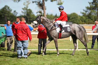 horse 8203