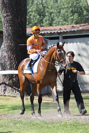 horse 7881