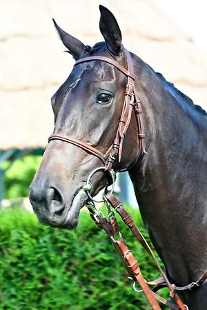 horse 8029
