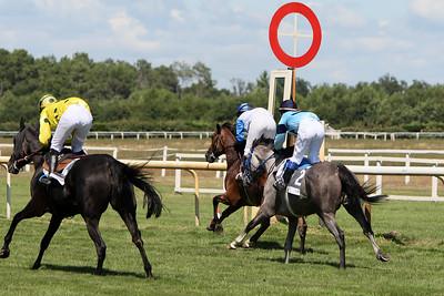 horse 7838