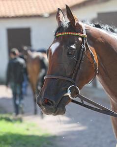horse 8007