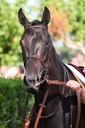 horse 8053