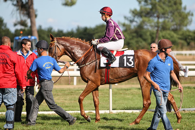 horse 8195