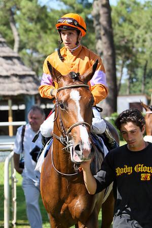 horse 7958-