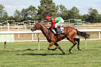 horse 7930