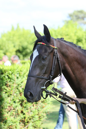 horse 8046
