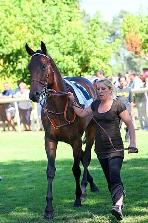 horse 7866