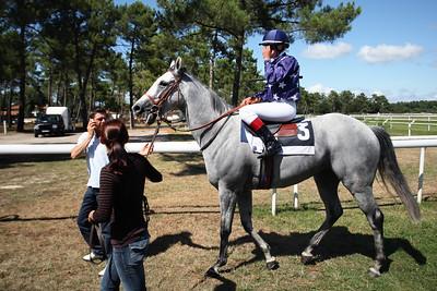 horse 7846