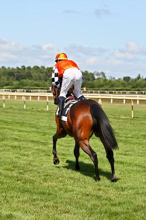 horse 7901