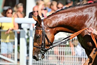 horse 8125