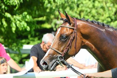 horse 7970