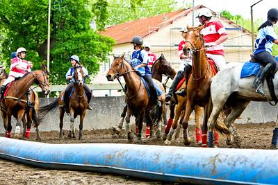 horseball 6599