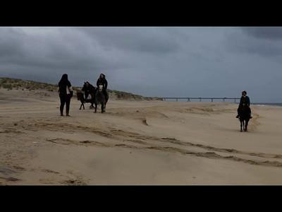 Horses Beach-Part2