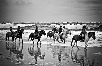 horse beach 5929-4