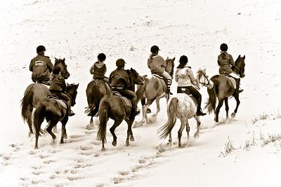 horse beach 5785-3