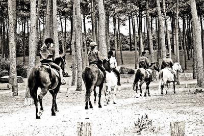 horse-rinding 5982-3