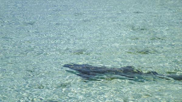 Exuma Islands, above water