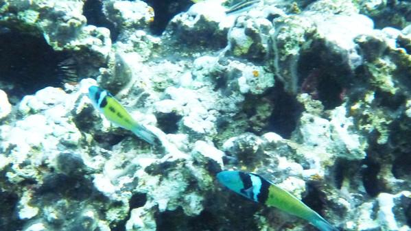 Exuma Islands, underwater shots