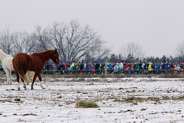Record-Eagle/Jan-Michael Stump<br /> Horses from a nearby farm watch the start of Saturday's Farmland 5k European Style XC race.