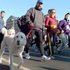 Andover: Lots of dogs walk with their owners during the 21st Annual Feaster Five Road Race in Andover Thanksgiving morning. Photo by Tim Jean/Eagle-Tribune Thursday, November 27, 2008