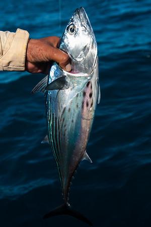 Fly Fishing in Baja California, 2014-11-05