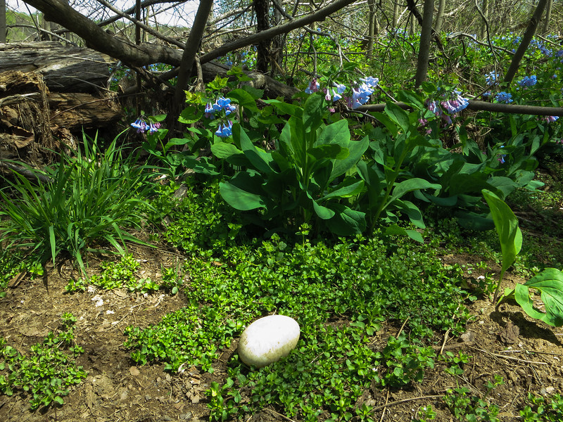 Goose egg with blue bells on the lunch island.