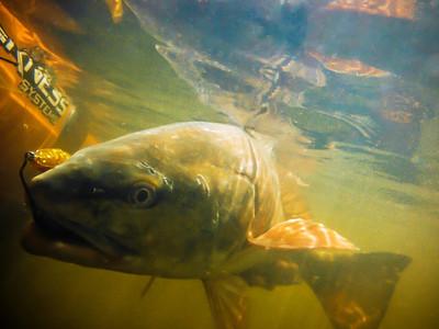 Redfish_0900_byjoshuacoltfisher