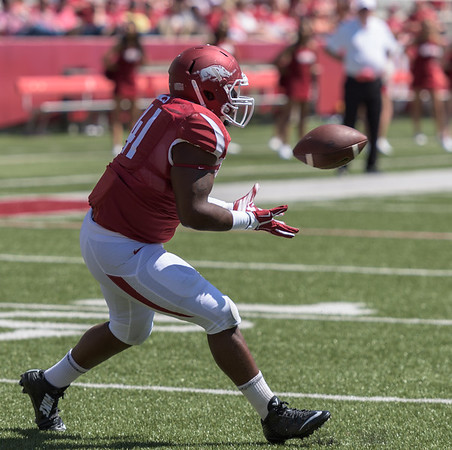 Fullback Chris Jones with a touchdown catch during the Arkansas Red-White Spring Football Game on Saturday, April 25, 2015 in Fayetteville, Arkansas at Donald W. Reynolds Razorback Stadium.  The Red team won 62-18 in front of an official attendance of 41,220 fans.   (Alan Jamison, Nate Allen Sports Service)