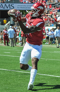 Damon Mitchell with a catch during pre-game warmups before a football game between the Arkansas Razorbacks and the Toledo Rockets on Saturday, 9/12/2015.  Toledo won 16-12.   (Alan Jamison, Nate Allen Sports Service)
