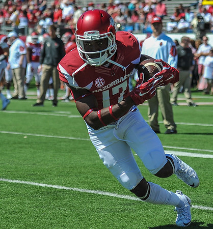 Jojo Robinson with a catch during pre-game warmups before a football game between the Arkansas Razorbacks and the Toledo Rockets on Saturday, 9/12/2015.  Toledo won 16-12.   (Alan Jamison, Nate Allen Sports Service)