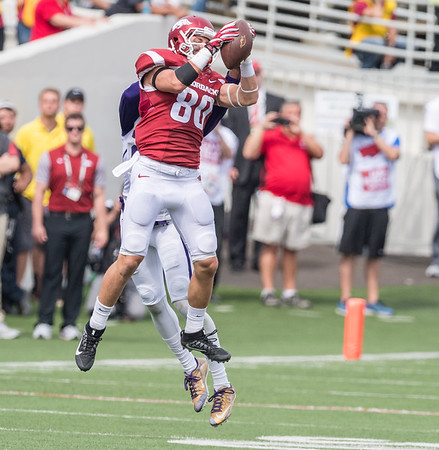 Arkansas Razorbacks wide receiver Drew Morgan (80) catches a ball during a football game between the Arkansas Razorbacks and the Alcorn State Braves on Saturday, October 1, 2016.  (Alan Jamison, Nate Allen Sports Service)