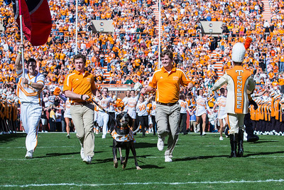Knoxville, TN - November 10, 2012:  Smokey the mascot runs out through the Power T before the game between the Missouri Tigers and the Tennessee Volunteers at Neyland Stadium in Knoxville, TN. Photo By Tim Gangloff/Tennessee Athletics