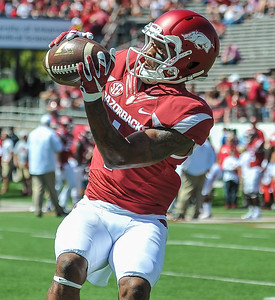 Jared Cornelius with a catch during pre-game warmups before a football game between the Arkansas Razorbacks and the Toledo Rockets on Saturday, 9/12/2015.  Toledo won 16-12.   (Alan Jamison, Nate Allen Sports Service)