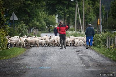 Møtte opp på feil bane(villedende info på msil-fotball.no), 1. omgang nesten ferdig, og så traff eg denne gjengen i Velledalen..............småstressa..... :-)