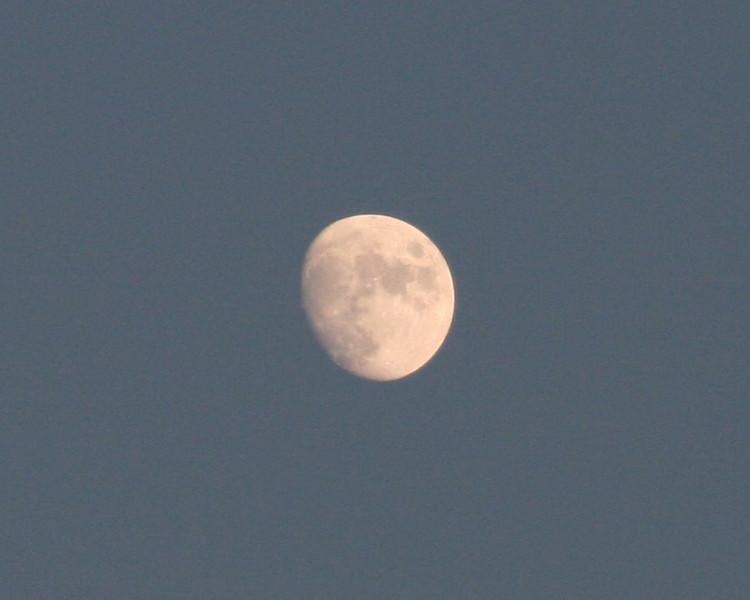 New moon -New champions