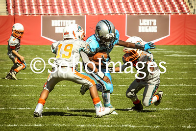 TCYF  PeeWee Dolphins vs TBYFL PeeWee Panthers 2016