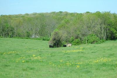 Gettysburg tour 2008 025