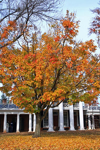 The trees on the Lawn were still vibrant in color.