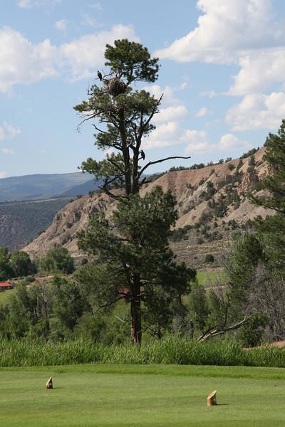 Bald Eagle Tree on No 10 Tee Box Aspen Glenn <br /> Carbondale, CO