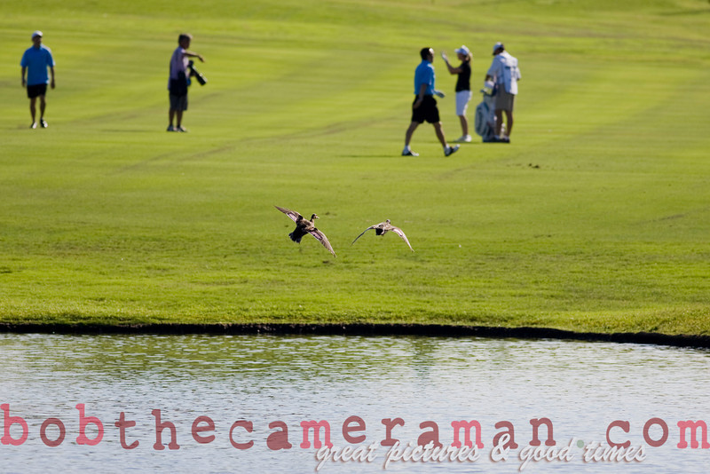 The pond at Ko Olina's 18th attracts golfers and ducks!