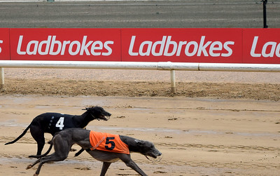 Monmore Green Greyhound Racing