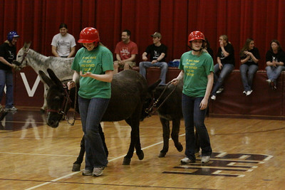 Havana Donkeyball 2011